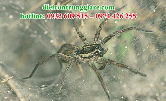 nhện đi đâu vào mùa đông