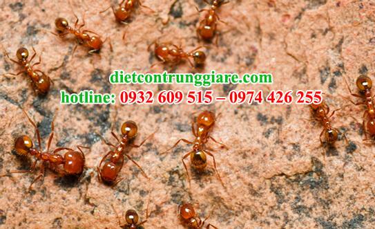 tác hại của kiến