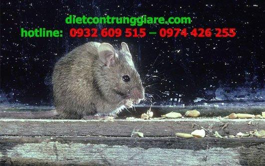những điều cần biết về chuột nhà