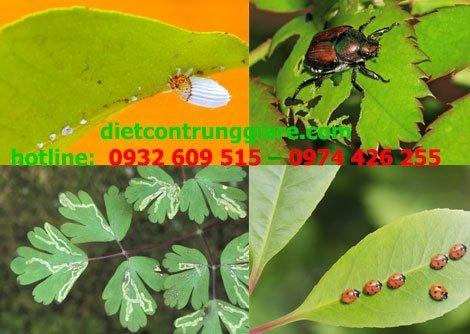 Xử lý côn trùng gây hại trong vườn