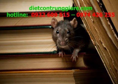 Cách xác định chuột phá hoại trong nhà