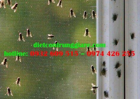 Tác hại của ruồi là gì?