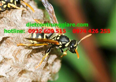 Ong bắp cày có nguy hiểm không?