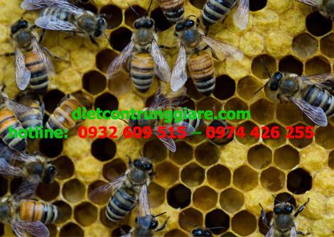 vòng đời của ong mật