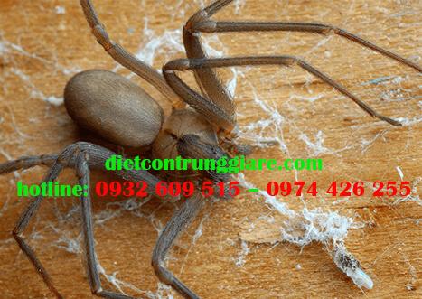 Cách loại bỏ nhện ẩn dật nâu