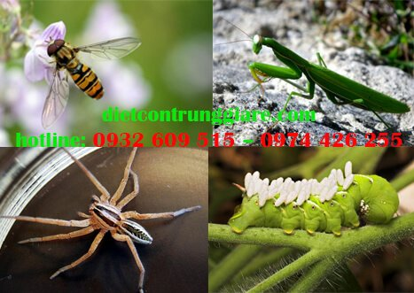 Những côn trùng có lợi