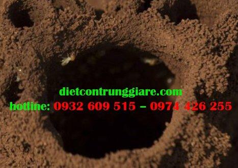 Ống bùn của mối là gì?