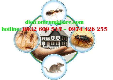 4 loài côn trùng gây hại nặng nhất