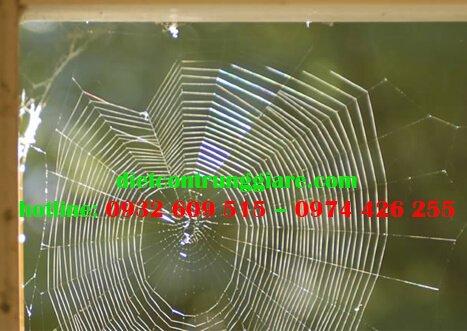 Các loại nhện tìm thấy trong nhà