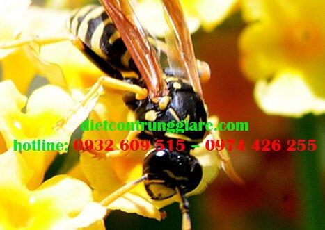 Những loại cây thu hút ong