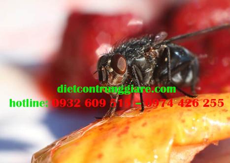 Thức ăn của ruồi là gì?