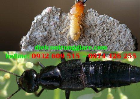 Ba con bọ trông giống kiến