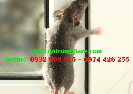 Chuột có thể trèo lên tường không?