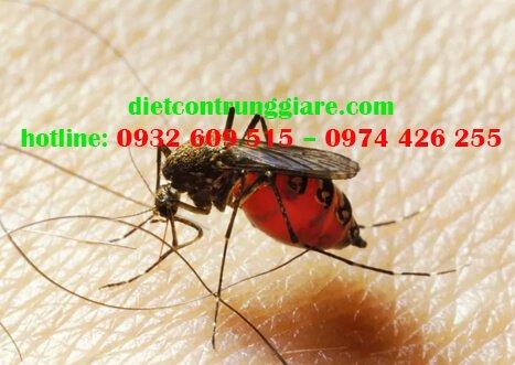 Làm thế nào để tránh muỗi đốt