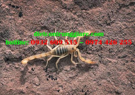 3 cách xua đuổi bọ cạp