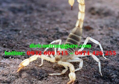 Các triệu chứng bọ cạp cắn