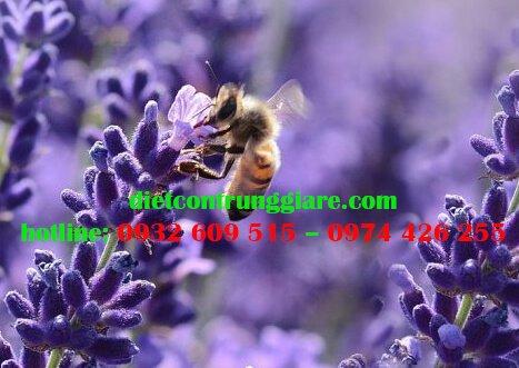 Hoa oải hương có đuổi muỗi không?