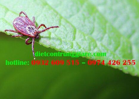 Mối nguy hiểm của bọ ve