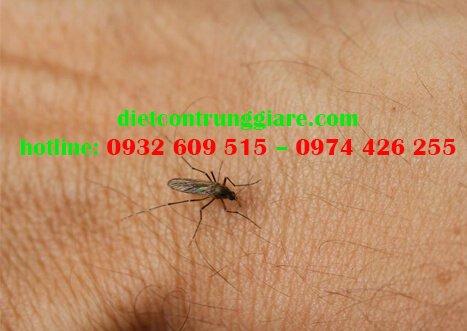 Phải làm gì khi bị muỗi đốt