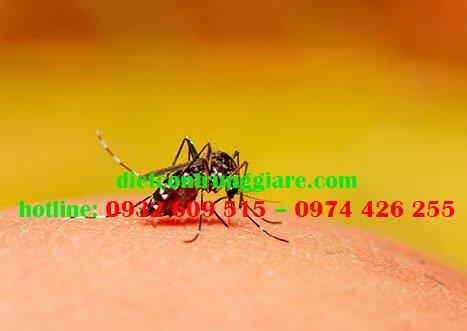 Các giai đoạn phát triển của muỗi