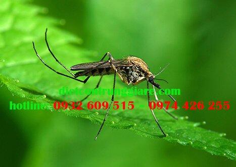 Các loài muỗi thường gặp