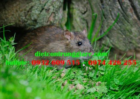 Tại sao cần phải kiểm soát chuột?