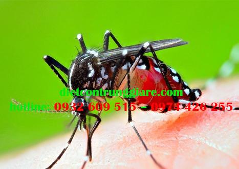 Cách xử lý muỗi hiệu quả