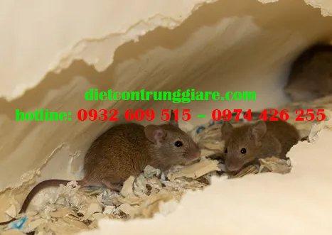 Mẹo kiểm soát chuột nhà hiệu quả