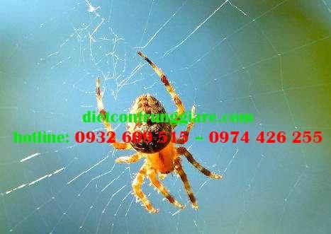 Mẹo kiểm soát nhện hiệu quả