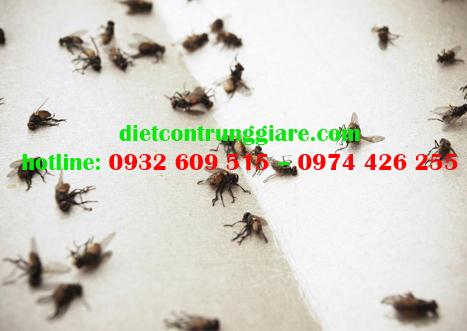 Mẹo kiểm soát ruồi nhà hiệu quả