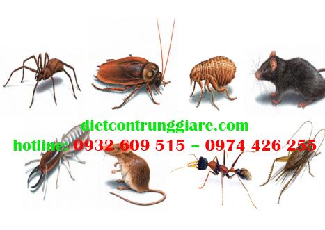 Top 10 côn trùng gây hại thường gặp