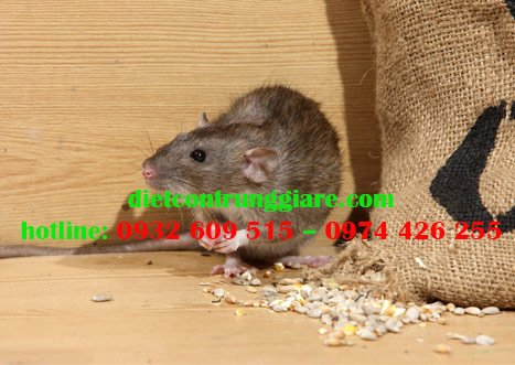 Cách ngăn chuột chui qua cửa sổ