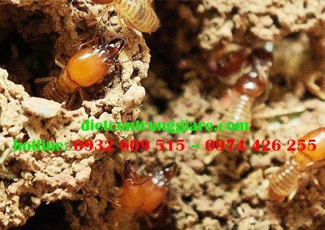 Những côn trùng giống mối